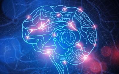 Hjärnanatomi för neuroledare