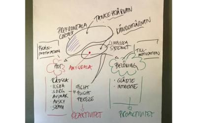 Introduktion till framtidens ledarskap – neuroledarskap
